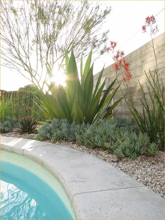 Swimming Pool Landscaping 10