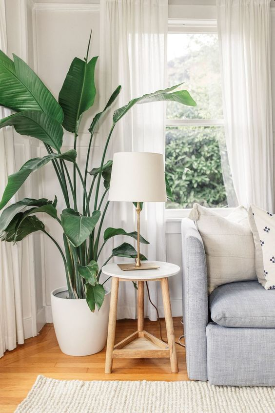 Living Room Plant: Chic Tropical Vibe