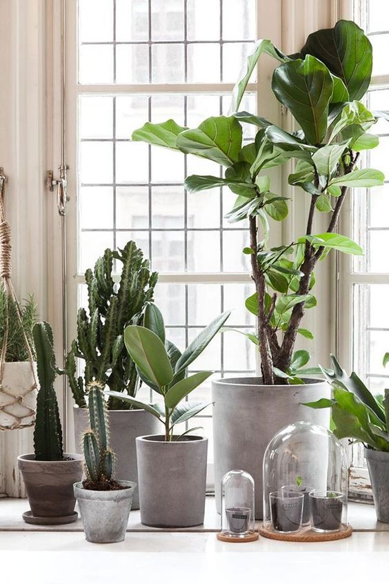 living room plant ideas 10