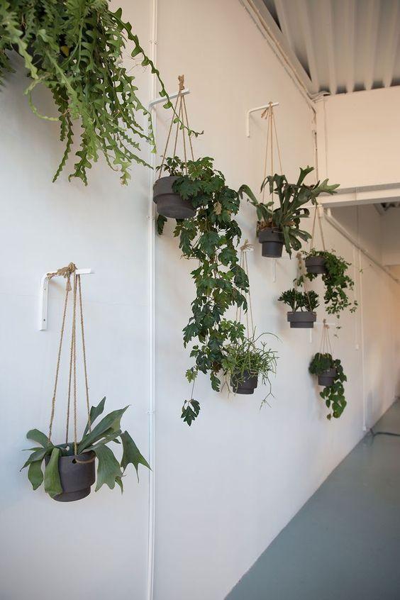 living room plant ideas 12