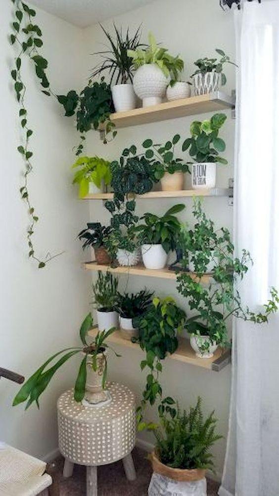 living room plant ideas 13