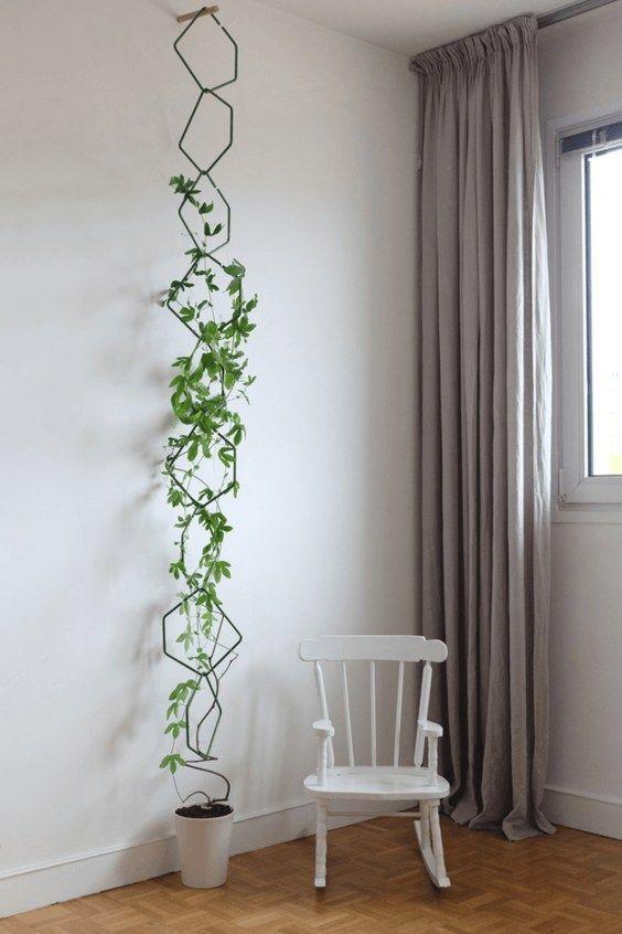 living room plant ideas 17