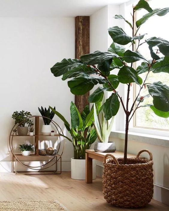 living room plant ideas 2