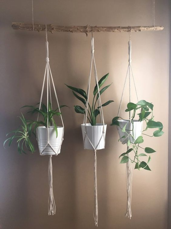 Living Room Plant: Catchy Hanging Plants