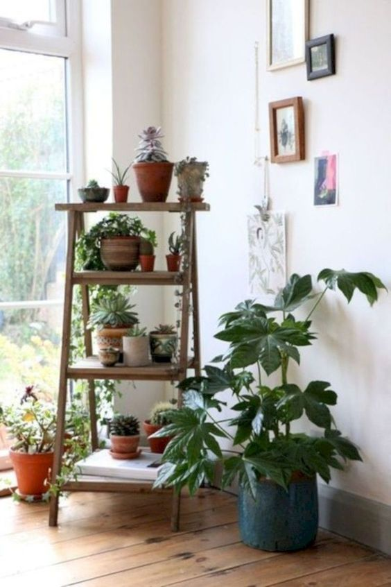 living room plant ideas 6