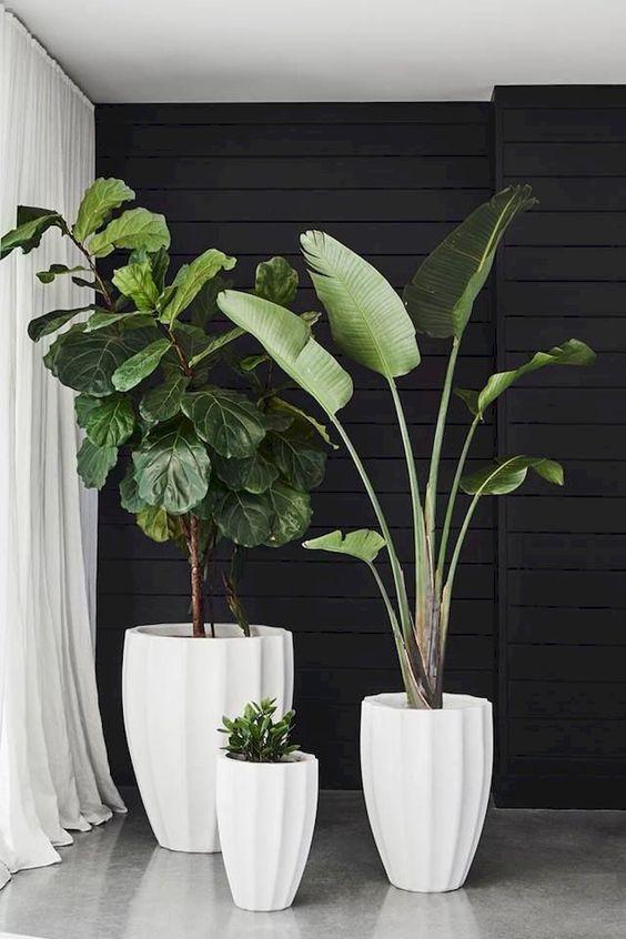 living room plant ideas 7