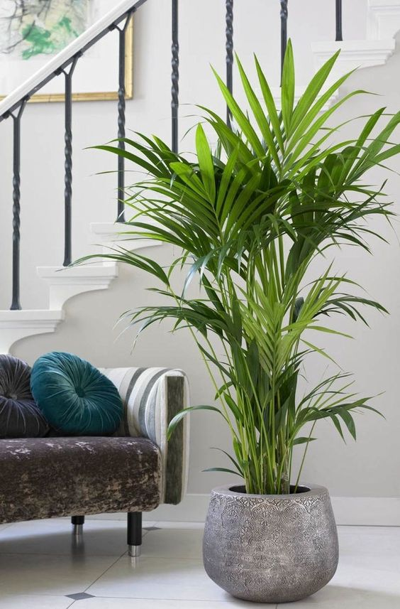 living room plant ideas 9