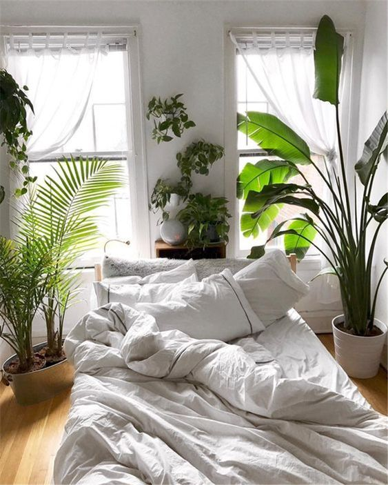 Bedroom Plants Ideas: Captivating Jungle Decor