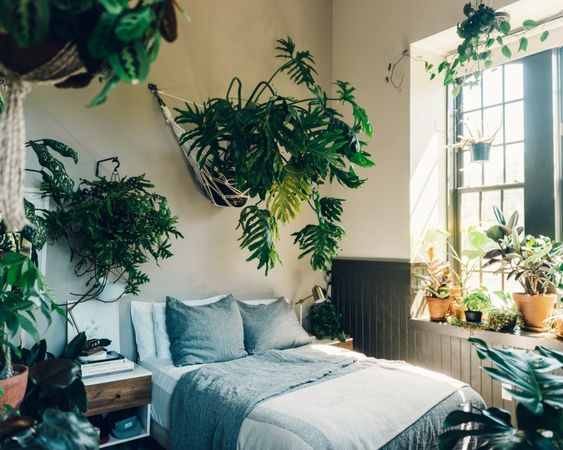 Bedroom Plants Ideas 23