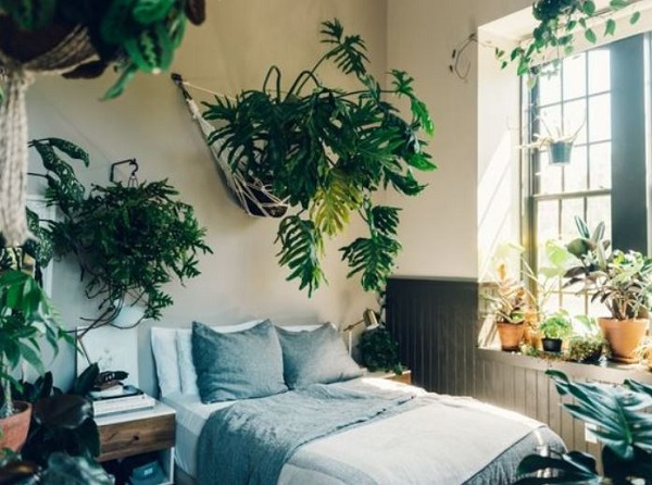 Bedroom Plants Ideas feature