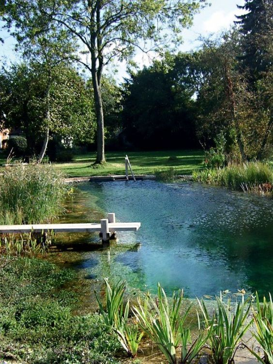 Natural Swimming Pool Ideas: Simple Earthy Pool