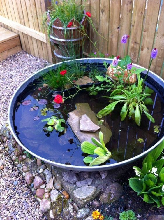 Backyard Pond Ideas: Simple Aquatic Garden