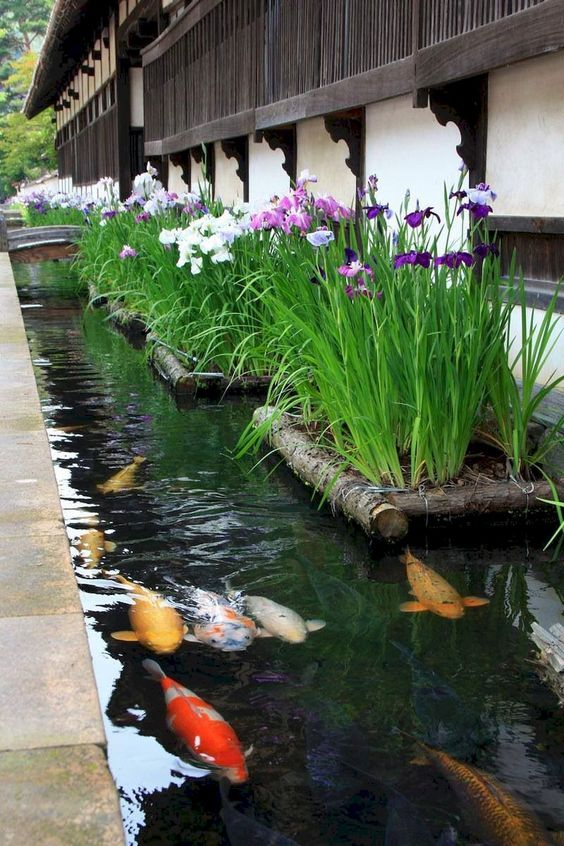 Backyard Pond Ideas: Side Koi Pond